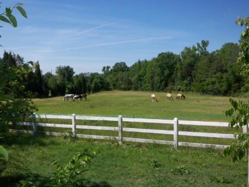 1_farm-horses
